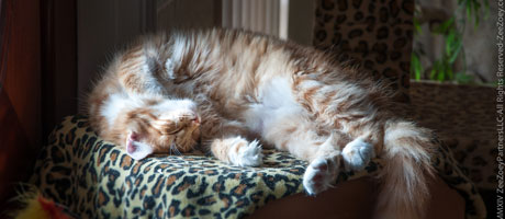 Living In Comfort With Cats 10 Tips To Managing Cat